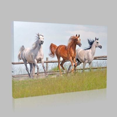 Çayırda Koşan Atlar Kanvas Tablo