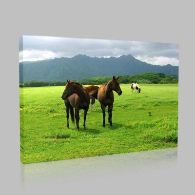 Çayırdaki Atlar Kanvas Tablo