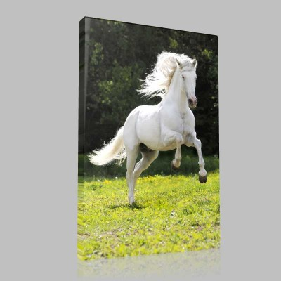 Çimende Koşan Beyaz At Kanvas Tablo