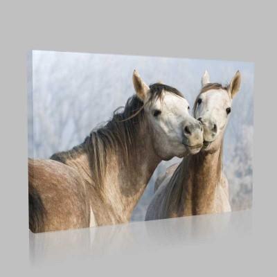 Öpüşen Atlar Kanvas Tablo