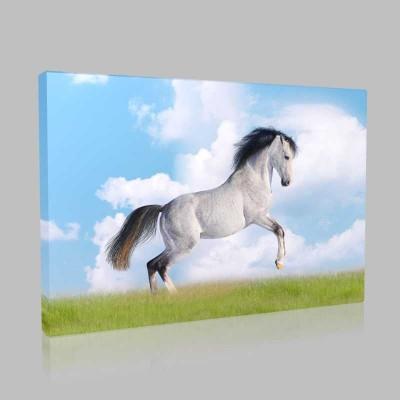 Şaha Kalkmış Beyaz At Kanvas Tablo