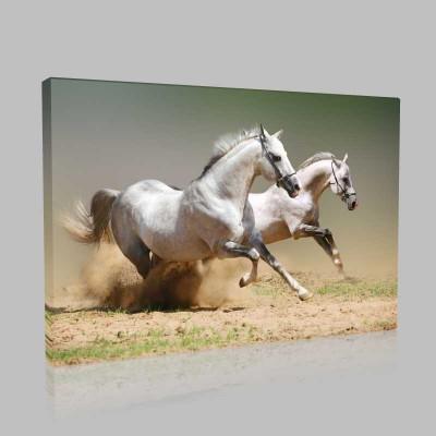 Beautiful White Horses Kanvas Tablo