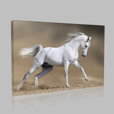 Beyaz At Kum Üzerinde Koşarken Kanvas Tablo