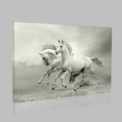 Dörtnala Koşan Beyaz At Kanvas Tablo