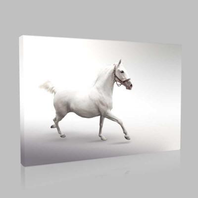 Güçlü Beyaz At Kanvas Tablo