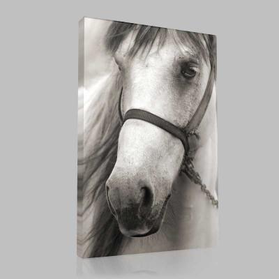 Hüzünlü Arap Atı Kanvas Tablo