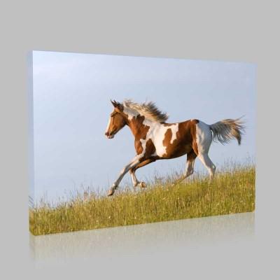 Kahverengili Beyazlı At Kanvas Tablo