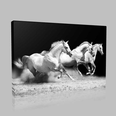 Karanlıkta Koşan Beyaz Atlar Kanvas Tablo