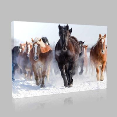 Karda Dörtnala Koşan Atlar Kanvas Tablo