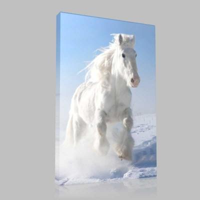 Karda Dörtnala Koşan Beyaz At Kanvas Tablo