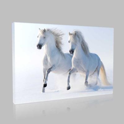 Karda Koşan İki Beyaz At Kanvas Tablo