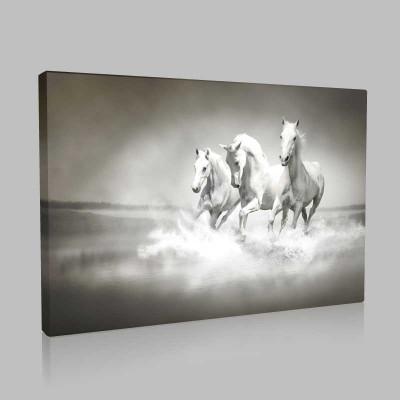 Koşan Beyaz Atlar Kanvas Tablo