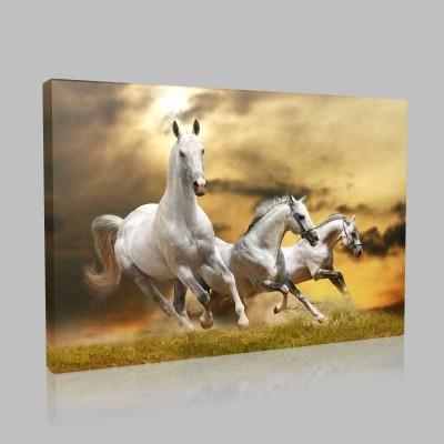 Rüzgara Koşan Atlar Kanvas Tablo