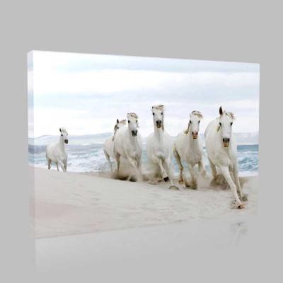Sahilde Koşan Atlar Kanvas Tablo
