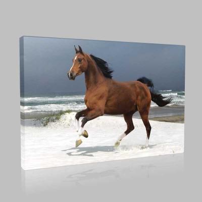 Sahilde Koşan Kahverengi At Kanvas Tablo