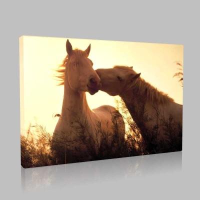 Sevgili Atlar Kanvas Tablo