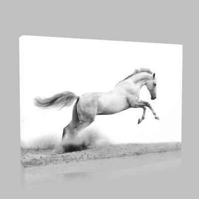 Siyah Beyaz Şaha Kalmış At Kanvas Tablo