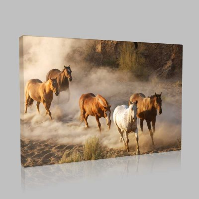 Vahşi Atlar  Kanvas Tablo