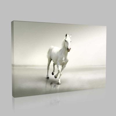 Yalnız Beyaz At Kanvas Tablo