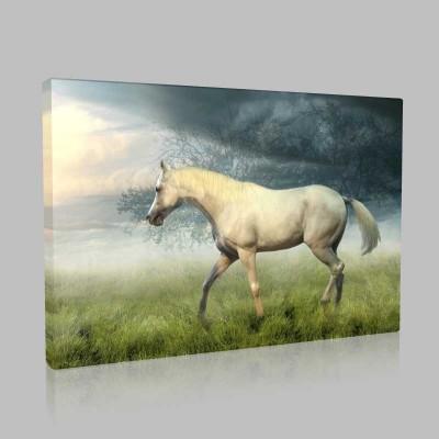 Yaz Akşamında Beyaz At Kanvas Tablo
