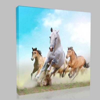 Beyaz At Ve Arkadaşları Kanvas Tablo