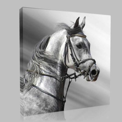 Kır Arap Atı Soldan Portre Kanvas Tablo