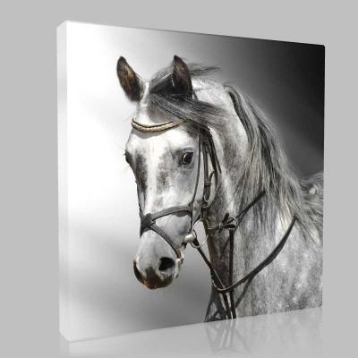 Kır Arap Atı Kanvas Tablo