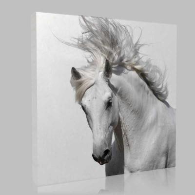 Portre Beyaz At Kanvas Tablo