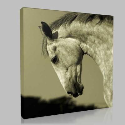 Vahşi İrlanda Atı Kanvas Tablo