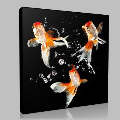 Üçlü Altın Balık Kanvas Tablo