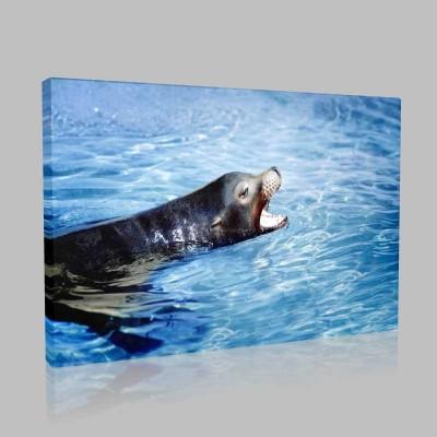 Deniz Aslanı Kanvas Tablo