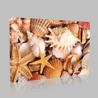 Deniz Kabukları Kanvas Tablo