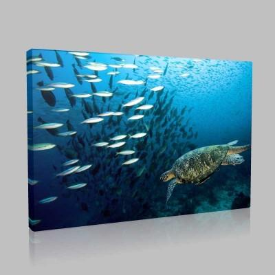 Deniz Kaplumbağası Ve Balıklar Kanvas Tablo