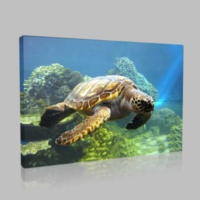 Deniz Kaplumbağası Ve Deniz Altı Kanvas Tablo