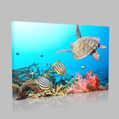 Deniz Kaplumbağası Ve Mercanlar Kanvas Tablo