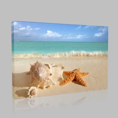 Deniz Yıldızı Ve Deniz Salyangozu Kanvas Tablo