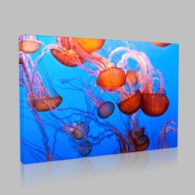 Denizanaları Kanvas Tablo