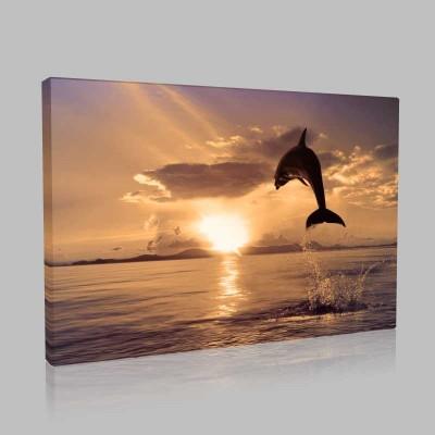 Dolphins At Play4 Kanvas Tablo