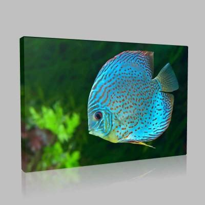 Mavi Akvaryum Balığı Kanvas Tablo