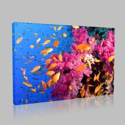 Mercan Kayalıklarında Balıklar Kanvas Tablo