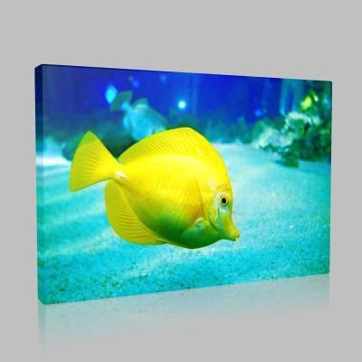 Mercan Kayalıklarında Tropikal Balıklar Kanvas Tablo