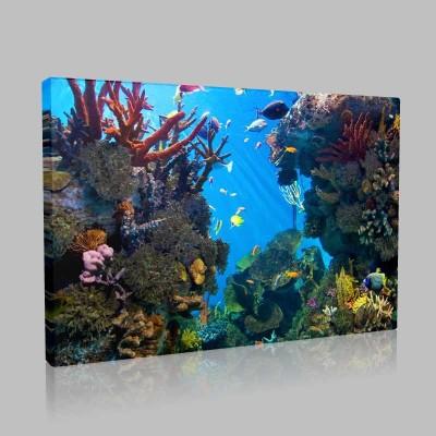 Mercan Kayalıklarında Yaşam Kanvas Tablo