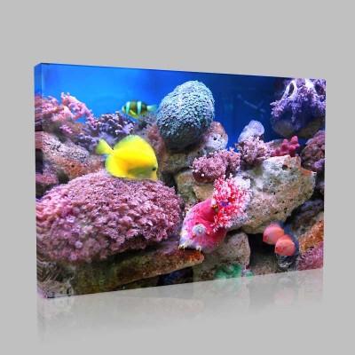 Mercanlar Ve Egzotik Balıklar Kanvas Tablo