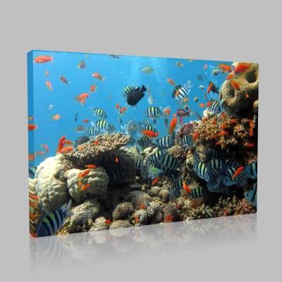 Okyanus Derinliklerinde Kanvas Tablo