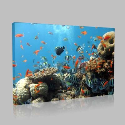 Resif Kanvas Tablo