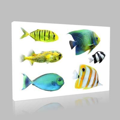 Süslü Balıklar Kanvas Tablo