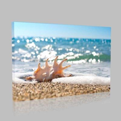 Sahilde Deniz Salyangozu Kanvas Tablo