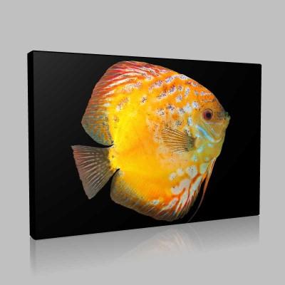 Sarı Akvaryum Balığı Kanvas Tablo