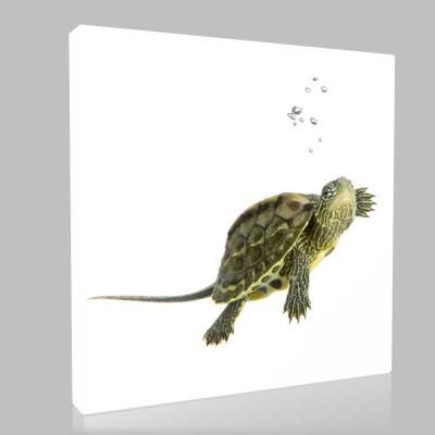 Su Kaplumbağası Kanvas Tablo
