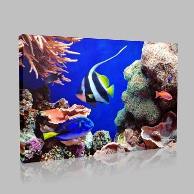 Tropik Balıklar Kanvas Tablo